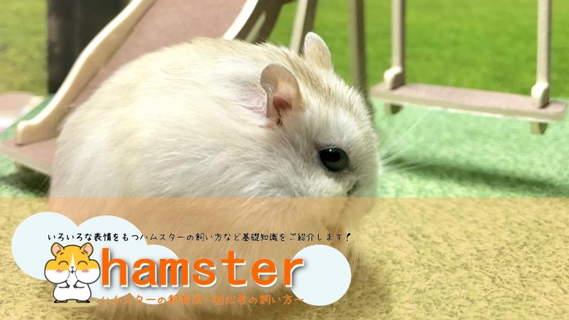 ハムスターの飼い方