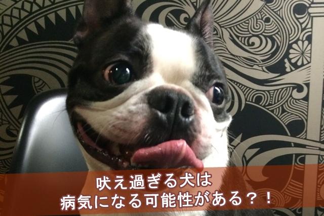 吠え過ぎる犬は病気になる可能性がある?!