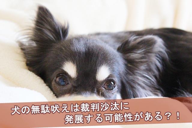 犬の無駄吠えは裁判沙汰に発展する可能性がある?!
