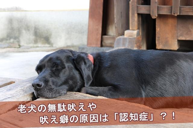 老犬の無駄吠えや吠え癖の原因は「認知症」?!