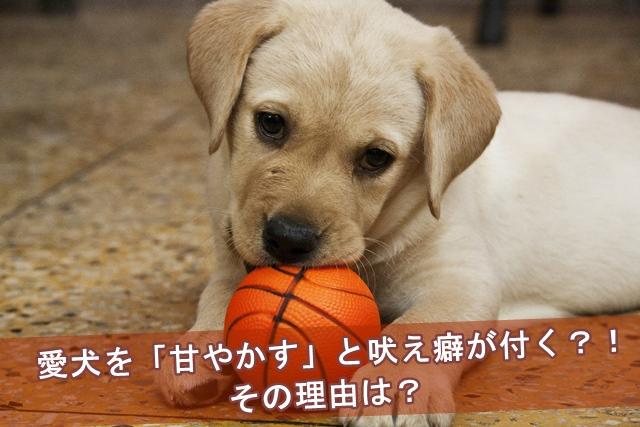 愛犬を「甘やかす」と吠え癖が付く?!その理由は?