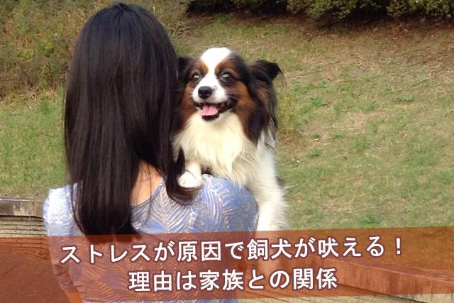ストレスが原因で飼犬が吠える!理由は家族との関係