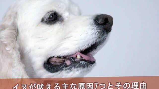 犬が吠える主な原因7つとその理由