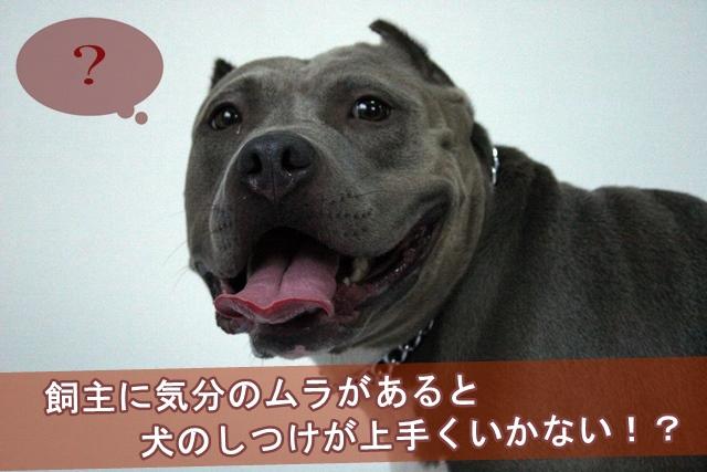 飼主に気分のムラがあると犬のしつけが上手くいかない!?