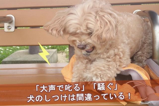 「大声で叱る」「騒ぐ」犬のしつけは間違っている!
