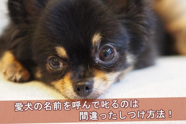 愛犬の名前を呼んで叱るのは間違ったしつけ方法!