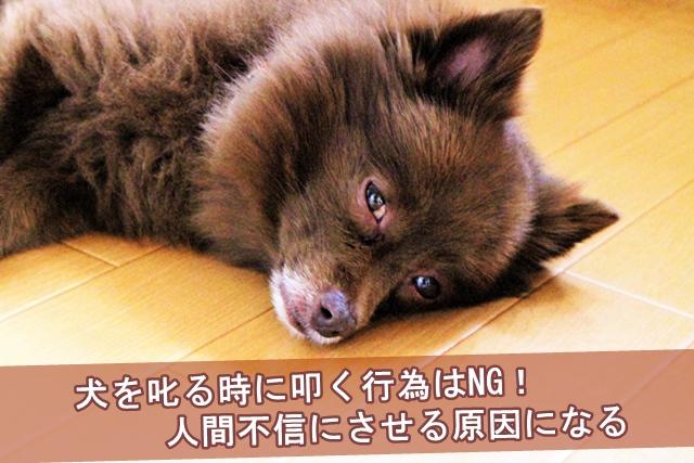 犬を叱る時に叩く行為はNG!人間不信にさせる原因になる