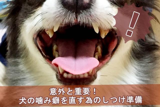 意外と重要!犬の噛み癖を直す為のしつけ準備