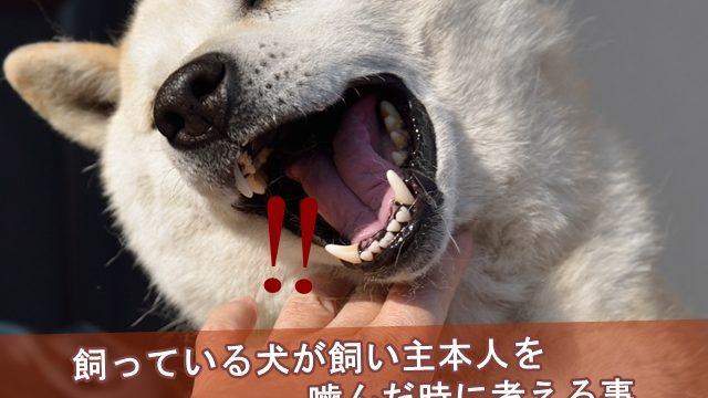 飼っている犬が飼い主本人を噛んだ時に考える事