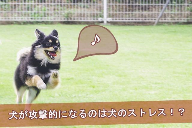 犬が攻撃的になるのは犬のストレス!?