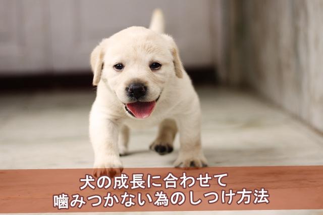 犬の成長に合わせて噛みつかない為のしつけ方法