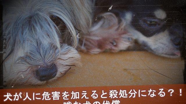 犬が人に危害を加えると殺処分になる?!噛む犬の代償