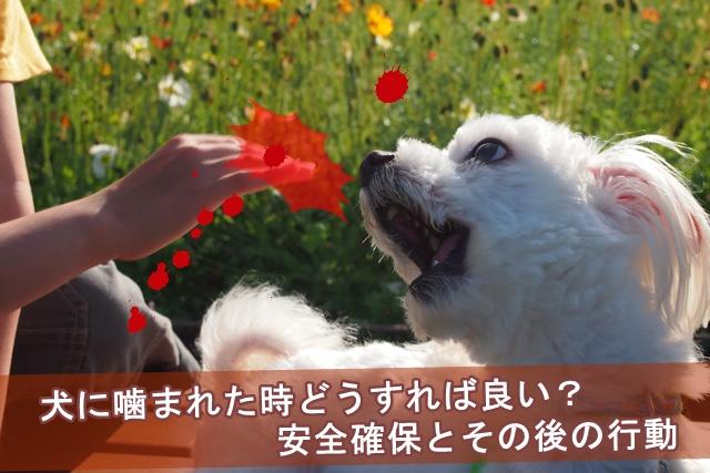 犬に噛まれた時どうすれば良い?安全確保とその後の行動