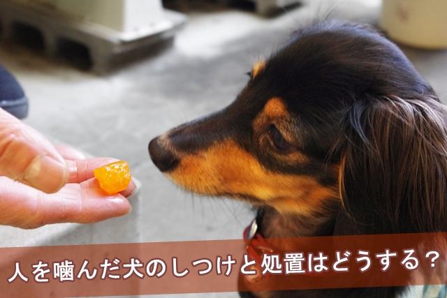 人を噛んだ犬のしつけと処置はどうする?