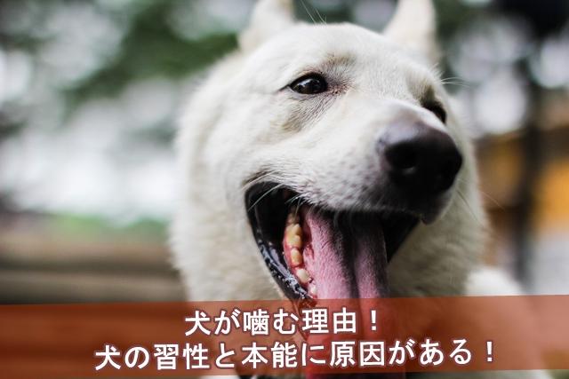 犬が噛む理由!犬の習性と本能に原因がある!