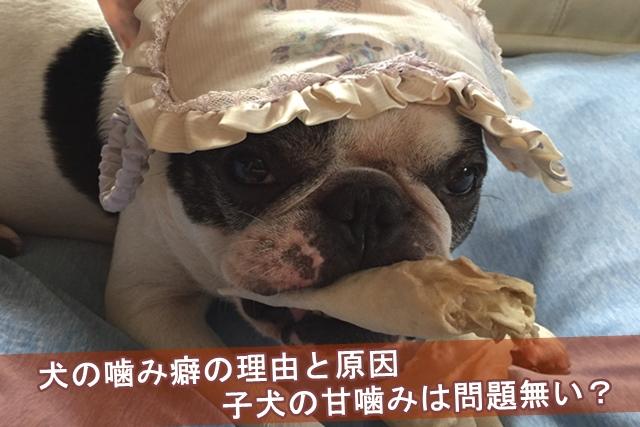 犬の噛み癖の理由と原因・子犬の甘噛みは問題無い?