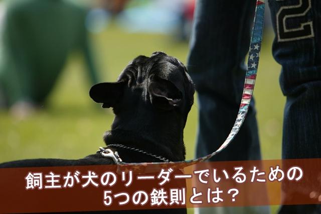 飼主が犬のリーダーでいるための5つの鉄則とは?