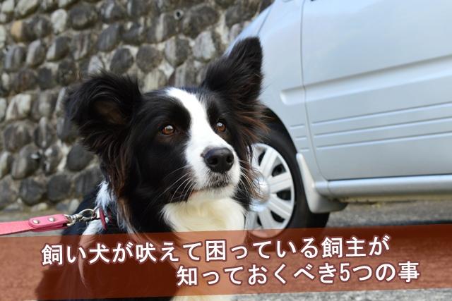 飼い犬が吠えて困っている飼主が知っておくべき5つの事