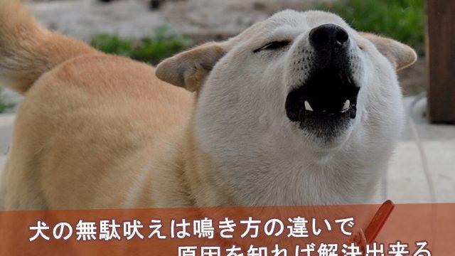 犬の無駄吠えは鳴き方の違いで原因を知れば解決出来る