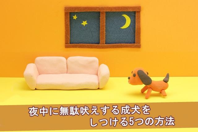 夜中に無駄吠えする成犬をしつける5つの方法