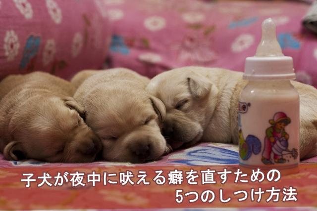 子犬が夜中に吠える癖を直すための5つのしつけ方法