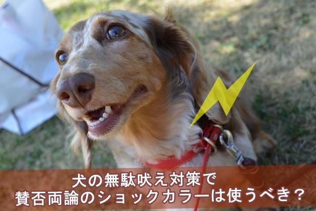 犬の無駄吠え対策で賛否両論のショックカラーは使うべき?