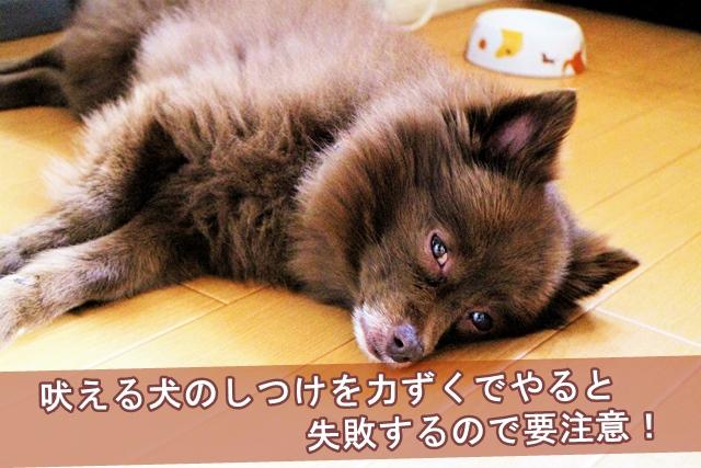 吠える犬のしつけを力ずくでやると失敗するので要注意!