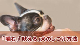 「噛む」「吠える」犬のしつけ方法!
