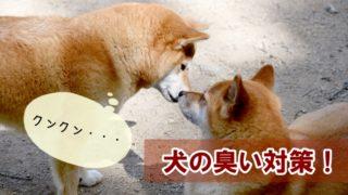 犬の臭い対策