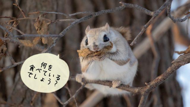 モモンガの餌!