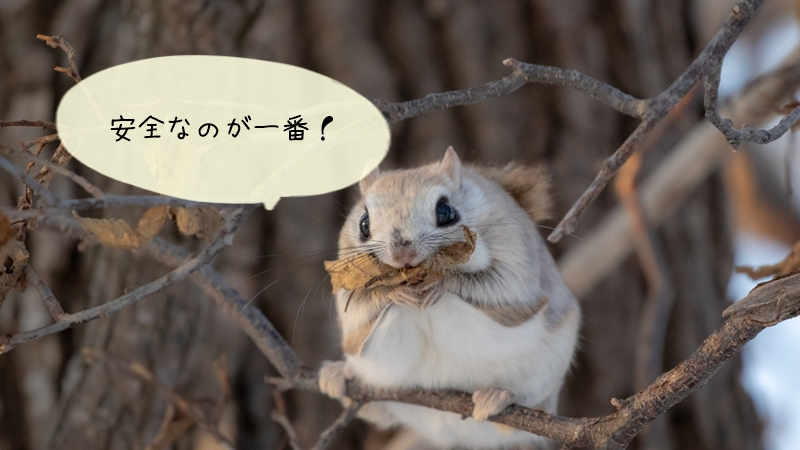 モモンガの臭い対策で市販の消臭剤ではダメな理由!